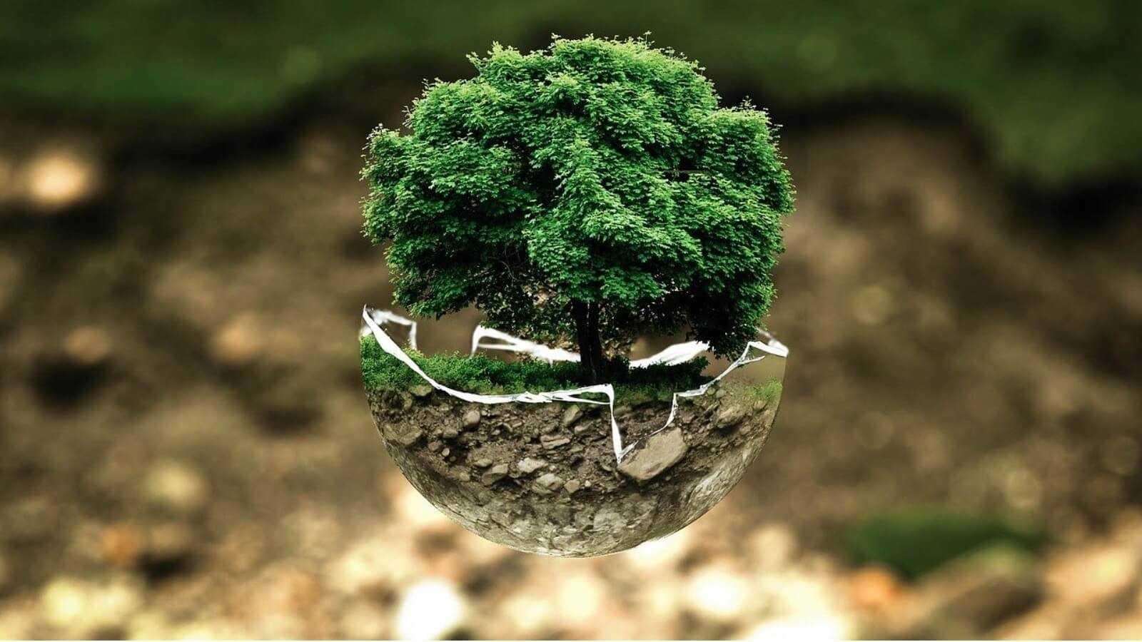 5 июня Всемирный день окружающей среды